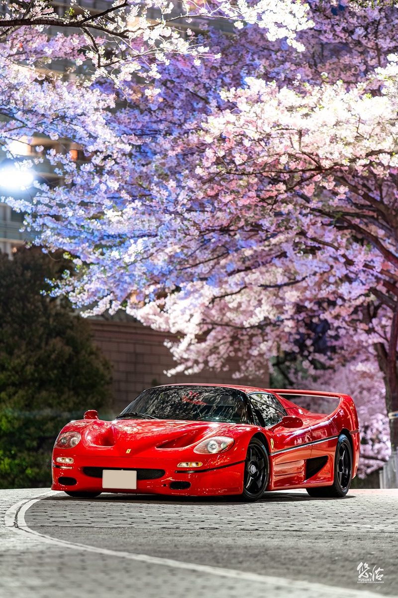 FERRARI F50 桜×車真